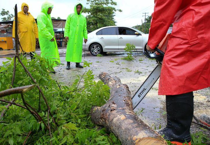El personal del Ayuntamiento retiró ramas que fueron tiradas por los vientos. (Cortesía)