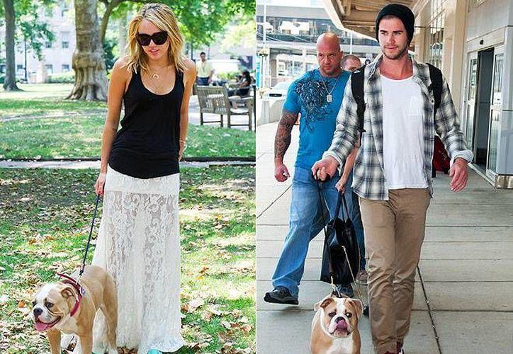 Miley y Liam ya no compartirán con sus seguidores detalles de su vida privada, como la convivencia con sus perros. (peoplepets.com)