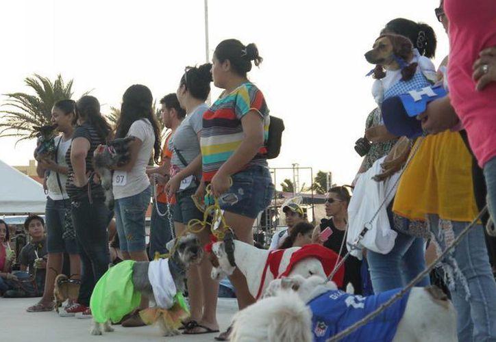 El concurso de mascotas se llevará a cabo el 23 de este mes en el parque Morelos de Progreso. (Manuel Pool/SIPSE)