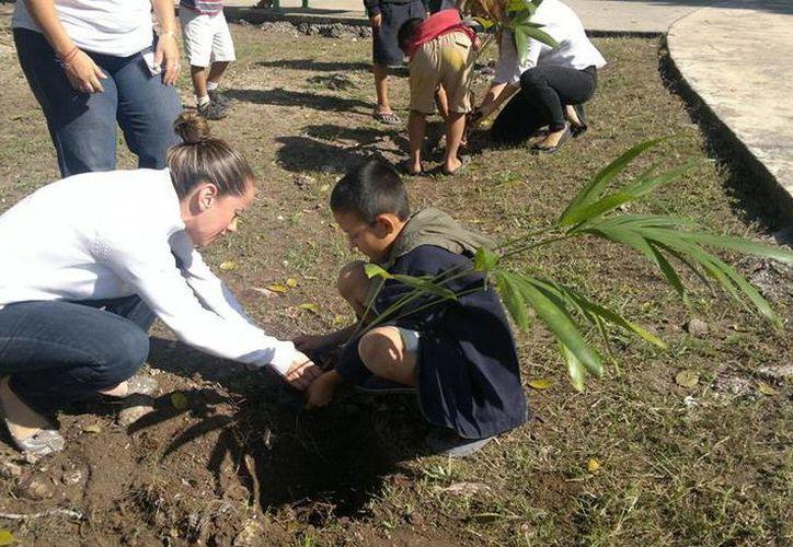 El objetivo del programa es que cada ciudadano pueda actuar como el protector de la planta que sembró. (Francisco Gálvez/SIPSE)