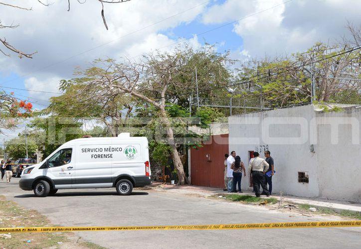 El hallazgo se dio en un predio de la colonia El Porvenir, en esta ciudad. (Victoria González/SIPSE)