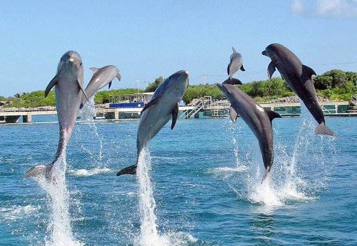 La empresa Dolphin Discovery inició los trámites ambientales para abrir un delfinario en Oaxaca. (Cortesía)