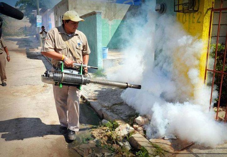 Las acciones para combatir el dengue han logrado que la cifra de casos disminuya: entre enero y marzo de 2015 sólo hay 50 registros. (Milenio Novedades/Archivo)