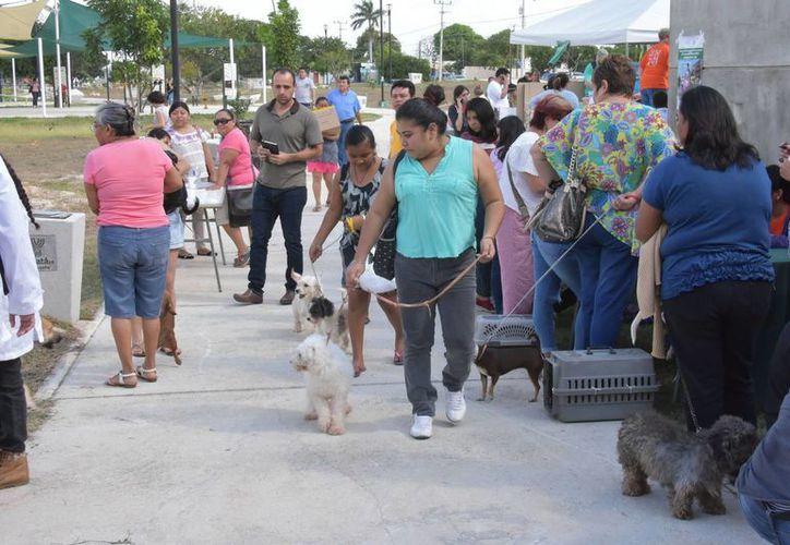 En la primera jornada de esterilización canina y felina aplicada en Mérida, Progreso y Valladolid participaron médicos veterinarios de varios estados del país, así como de ocho naciones. (Foto cortesía del Gobierno estatal)