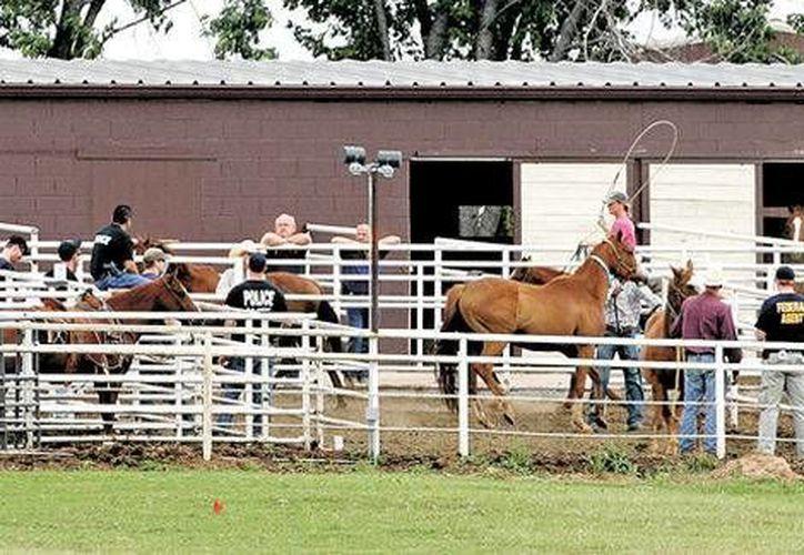 Durante el juicio por la operación de caballos anteriormente este año, los fiscales dijeron que la operación de lavado de dinero en Texas, Oklahoma y Nuevo México creó compañías fantasmas y en algunos casos amañó carreras. (Archivo/AP)