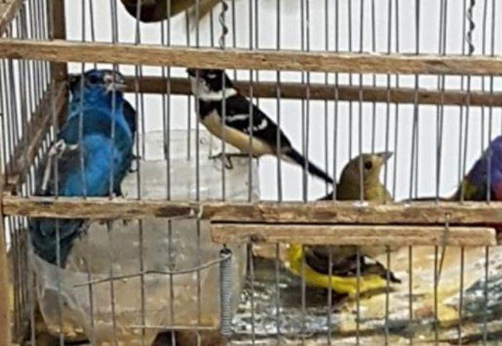 Imagen de algunas de las especies confiscadas por la Profepa en Mérida. (Milenio Novedades)