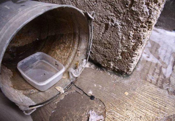 Los 227 empleados del Ayuntamiento de Mérida solicitarán acceso a los domicilios para detectar todos aquellos depósitos donde se pueda estancar agua que facilite la reproducción del mosco. (Archivo/SIPSE)
