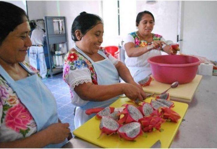 Anteriormente la comunidad tenía que esperar horas la llegada de panaderos que traían el producto desde otras localidades; a partir de ahora consumirán lo que el grupo de féminas elabora en el mismo poblado. (Redacción/SIPSE)