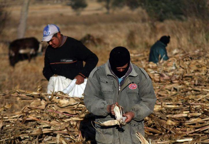 Según la CCC, sus líderes desaparecidos son gente dedicada al campo y a buscar el bienestar de los demás. (Notimex)