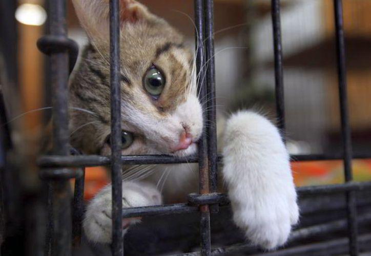 El felino brincó una malla e iba directo para el área B de mínima seguridad. (Foto: Contexto/Internet).