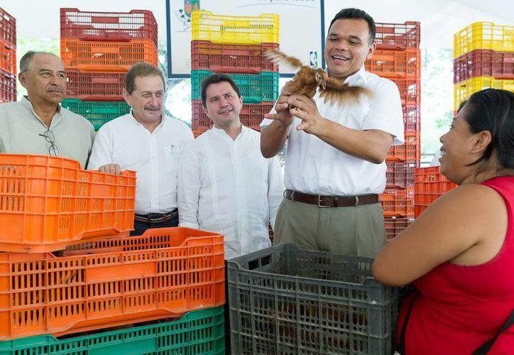 El gobernador Rolando Zapata estuvo este miércoles en Komchén, una de las localidades donde se prosigue con la entrega de aves de traspatio. (Foto: cortesía del Gobierno del Estado)