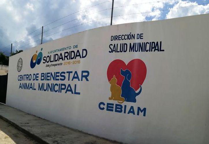 El Centro de Bienestar Animal Municipal ha enviado los encéfalos a la Jurisdicción Sanitaria número 2. (Octavio Martínez/SIPSE)