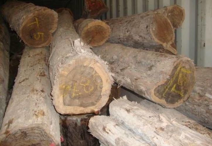 La Profepa aseguró 13.977 metros cúbicos de madera en rollo de la especie Ciricote. (Redacción/SIPSE)