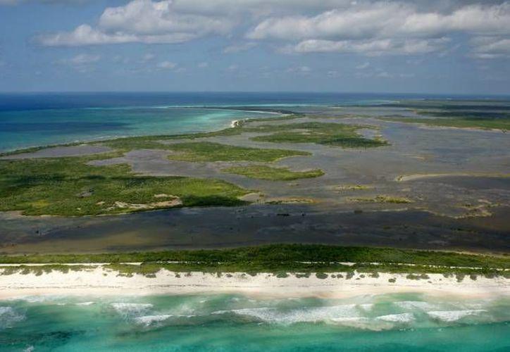 Representantes de seis Estados mexicanos se reúnen en Cozumel para hablar sobre la pérdida del mangle y la forma de frenar este problema. (Foto de contexto/Internet)