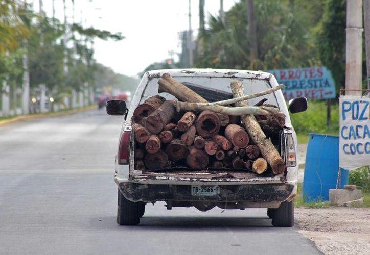En la isla de las golondrinas es muy común ver camionetas cargadas con madera. (Foto: Gustavo Villegas)