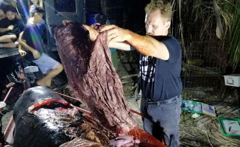Una ballena que recaló en la costa de Filipinas murió de hambre porque tenía el estómago lleno de plástico. (AFP)