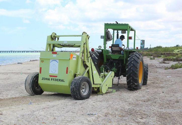 Autoridades locales han retirado toneladas de sargazo de la zona poniente de Progreso utilizando maquinaria especial.  (Gerardo Keb/ Milenio Novedades)