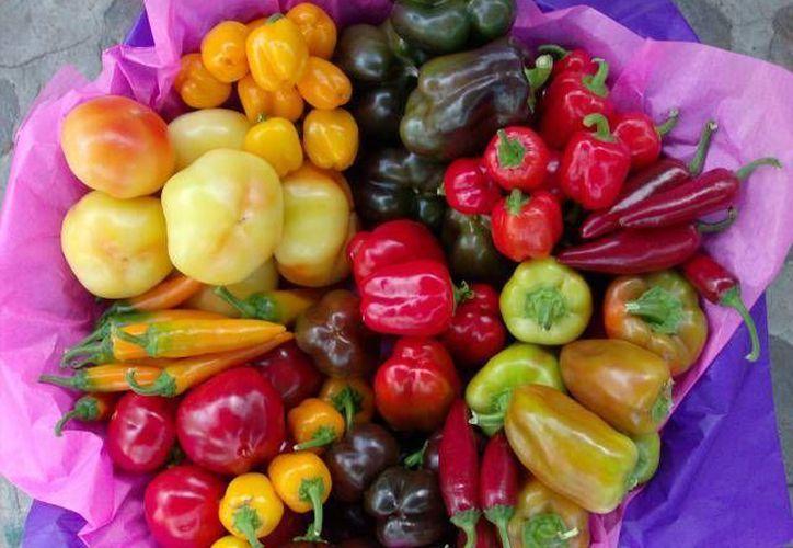 La producción de chile jalapeño representa una alternativa para los productores de la zona sur de Quintana Roo. (Harold Alcocer/SIPSE)