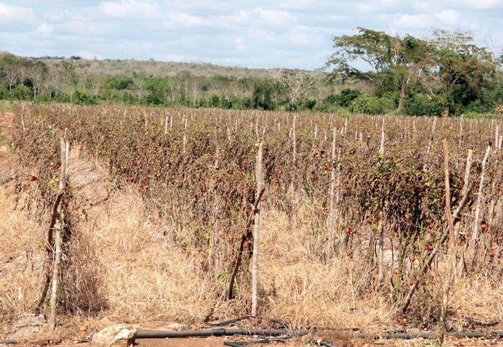 Piden buscar alternativas para los productores ante el pronóstico de severas sequías. (Milenio Novedades)
