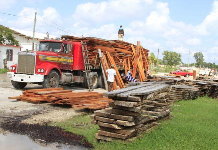 Los trámites burocráticos han frenado la exportación de maderas preciosas de Quintana Roo. (Ángel Castilla/SIPSE)