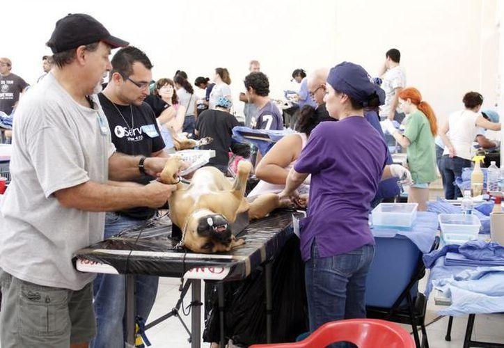 La campaña tiene como meta 2 mil 500 cirugías de esterilización a perros y gatos a cargo de personas de escasos recursos. (Milenio Novedades)