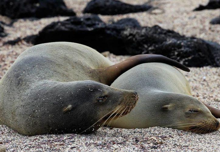 Los restos en descomposición de los lobos marinos fueron depositados en un basurero municipal de Lima. (EFE/Archivo)