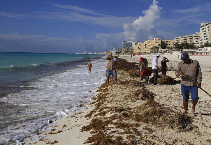 Con la estrategia se prevé que el sargazo que llegue a las costas de Quintana Roo sea mínimo. (Tomás Álvarez/SIPSE)