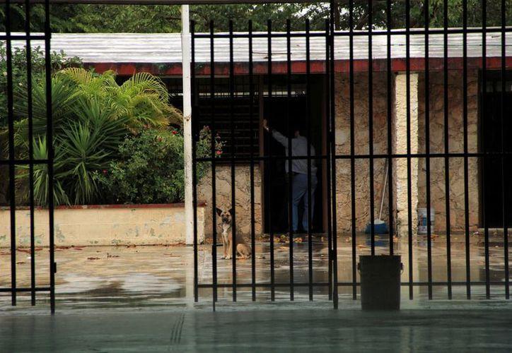 Muchas escuelas se vieron prácticamente vacías la mañana de ayer. (José Acosta/SIPSE)