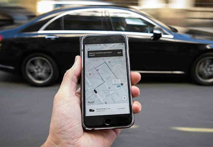 El sujeto no resistió ver al pajarito y pidió un Uber sólo para el animal.  (DailyMail)