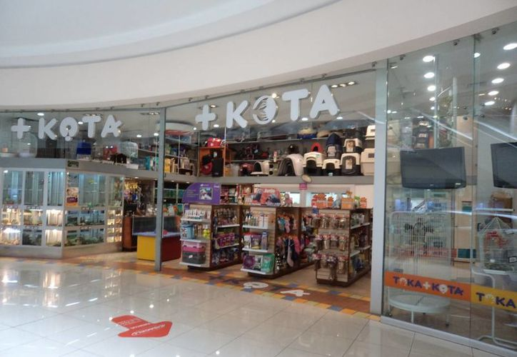 En 2014 +Kota recibió una multa de cuatro millones 383 mil pesos al no poder acreditar la legalidad de más de 187 ejemplares. (lunaparc.com.mx)