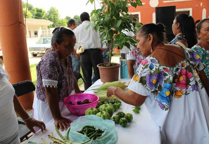 En la primera Feria de Seguridad Alimentaria y Nutricional de Yucatán, productores del sur mostraron a la Sagarpa los principales resultados de la implementación de sus proyectos. (Fotos cortesía del Gobierno estatal)
