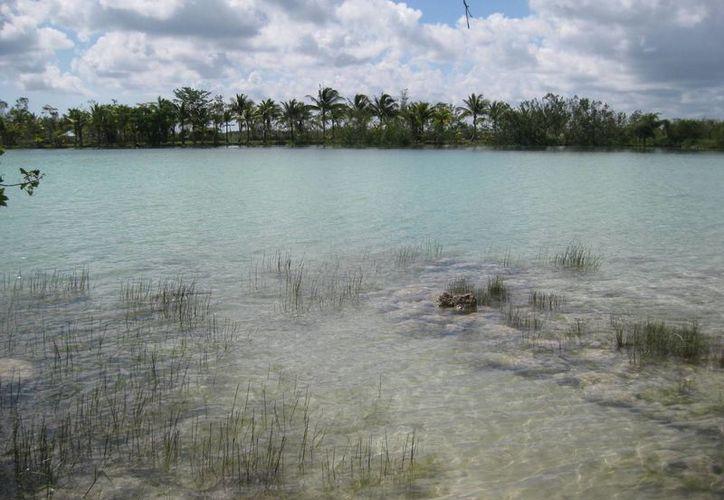 La Bahía de Chetumal necesita realizar acciones de conservación en zonas de manglar. (Claudia Martín/SIPSE)