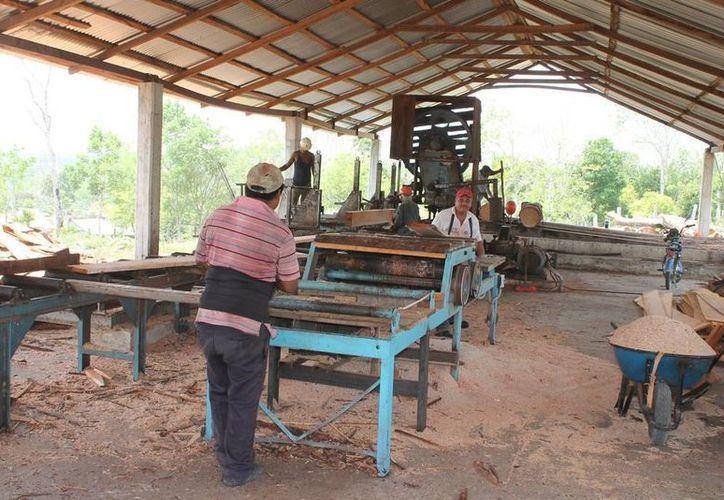 Q. Roo es uno de los estados con mayor riqueza forestal en el país. (Edgardo Rodríguez/SIPSE)
