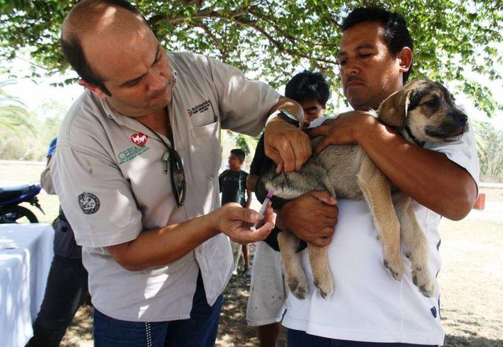 Se estima que en Solidaridad existen aproximadamente 60 mil animales entre gatos y perros. (Octavio Martínez/SIPSE)