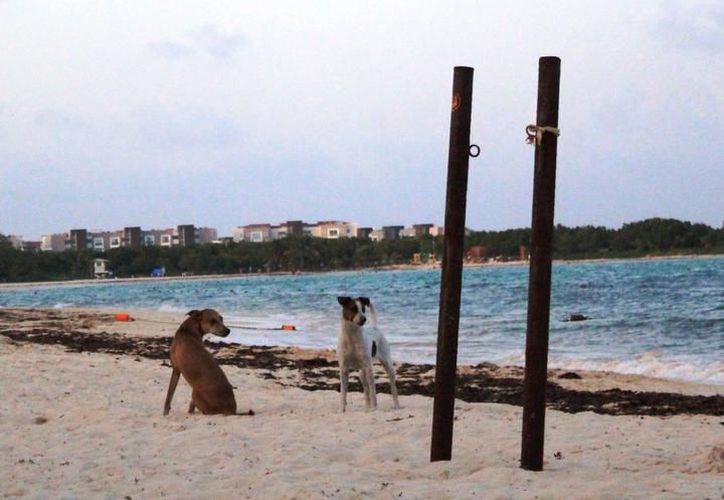 A pesar de la restricción que hay en la playa sobre introducir perros, muchos bañistas siguen cometiendo esta falta. (Archivo/SIPSE).