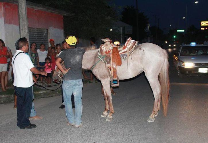 Elementos de Tránsito se hicieron cargo del hecho que concluyó en un accidente con un taxi. (Manuel Salazar/SIPSE)