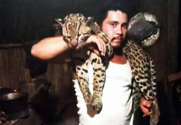 En una de las foto se obseva al felino sobre el hombro de un hombre, quien le detiene la cabeza con la mano derecha. (Tabasco HOY)