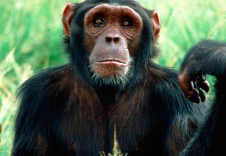 La viruela sísmica se descubrió en 1958 en una colonia de monos. (Contexto/Internet)