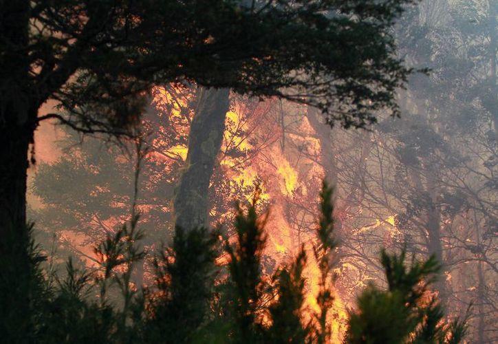 Hasta el momento no se reportan daños importantes ni víctimas mortales por el fuego que se extiende por varias regiones de Chile. (EFE)