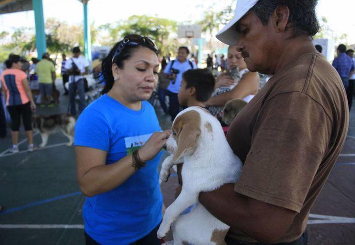Después de la campaña la vacuna sólo se podrá conseguir en las veterinarias con un un costo. (Harold Alcocer/SIPSE)