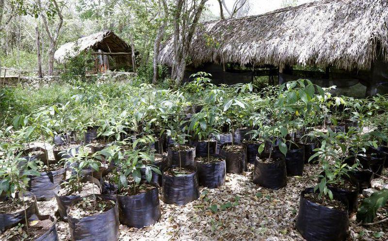 Vivero municipal dona al mes 400 plantas nativas for Vivero del parque