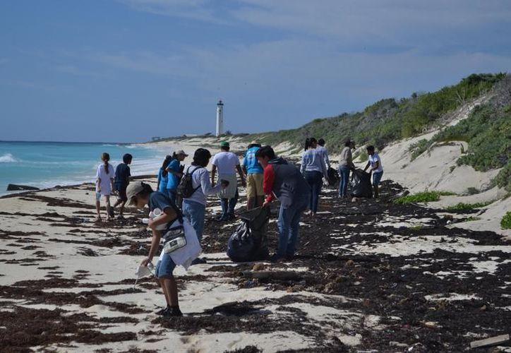 Con más de 100 voluntarios, la plataforma Airbnb realizó limpieza de playas en Puerto Morelos. (SIPSE)