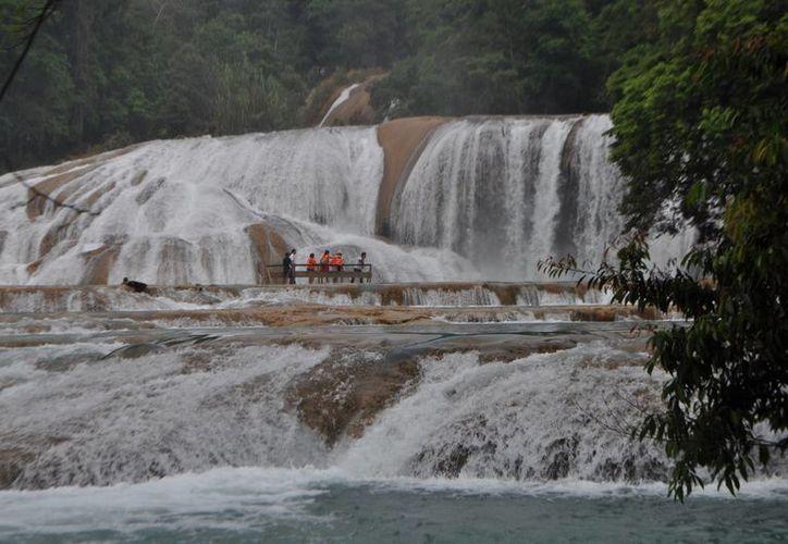 En lo que va del año la CROC ha organizado siete excursiones familiares a estados del sur de México.  (Cortesía/CROC)