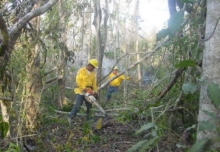 El personal contratado desarrolla la actividad de guarda rayas en la prevención de incendios forestales. (Harold Alcocer/SIPSE)
