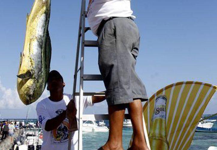 "Luego de dos días de actividades, hoy terminó el quinto Torneo de Pesca ""Don Andrés García Lavín"".  (Francisco Gálvez/SIPSE)"