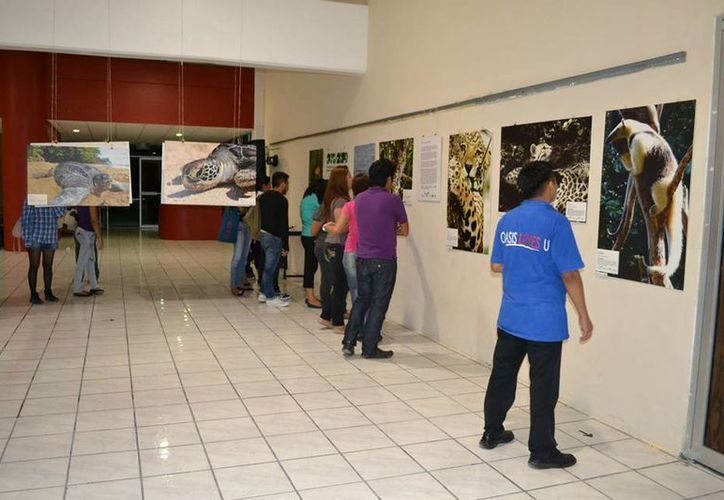 La exhibición se realizó en la Universidad Tecnológica de Cancún. (Cortesía/SIPSE)