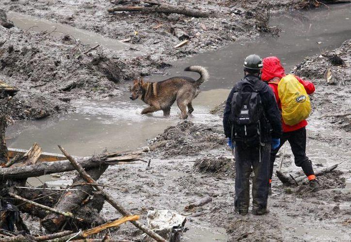 Perros usados para encontrar a víctimas del desastre tendrán un descanso de dos días para que no pierdan su capacidad rastreadora. (Agencias)