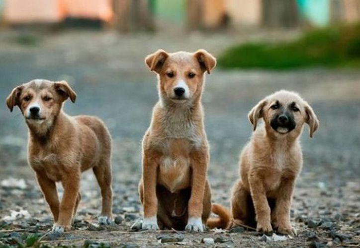 Activistas rusos piden a las autoridades parar sacrificio de perros callejeros, previo al Mundial. (Foto: Contexto)