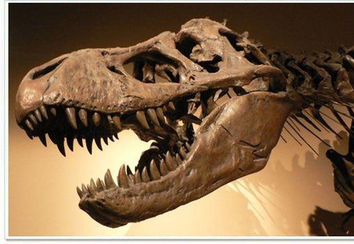 El desierto de Coahuila es un oasis para los paleontólogos (web-mix.ws)