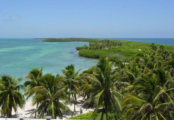 En Quintana Roo se podría hacer investigación en muchas áreas, sobre todo lo relacionado con el medio ambiente y los recursos naturales. (Redacción/SIPSE)
